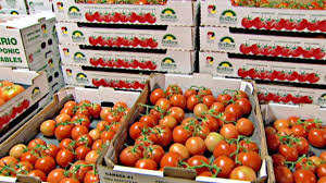 maroc-ue-tomate