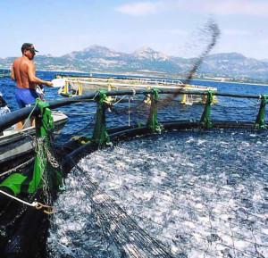 maroc-ue-aquaculture